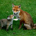 Mother & Cub by davidbell_uk