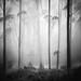 Forest Dream by Hengki Koentjoro