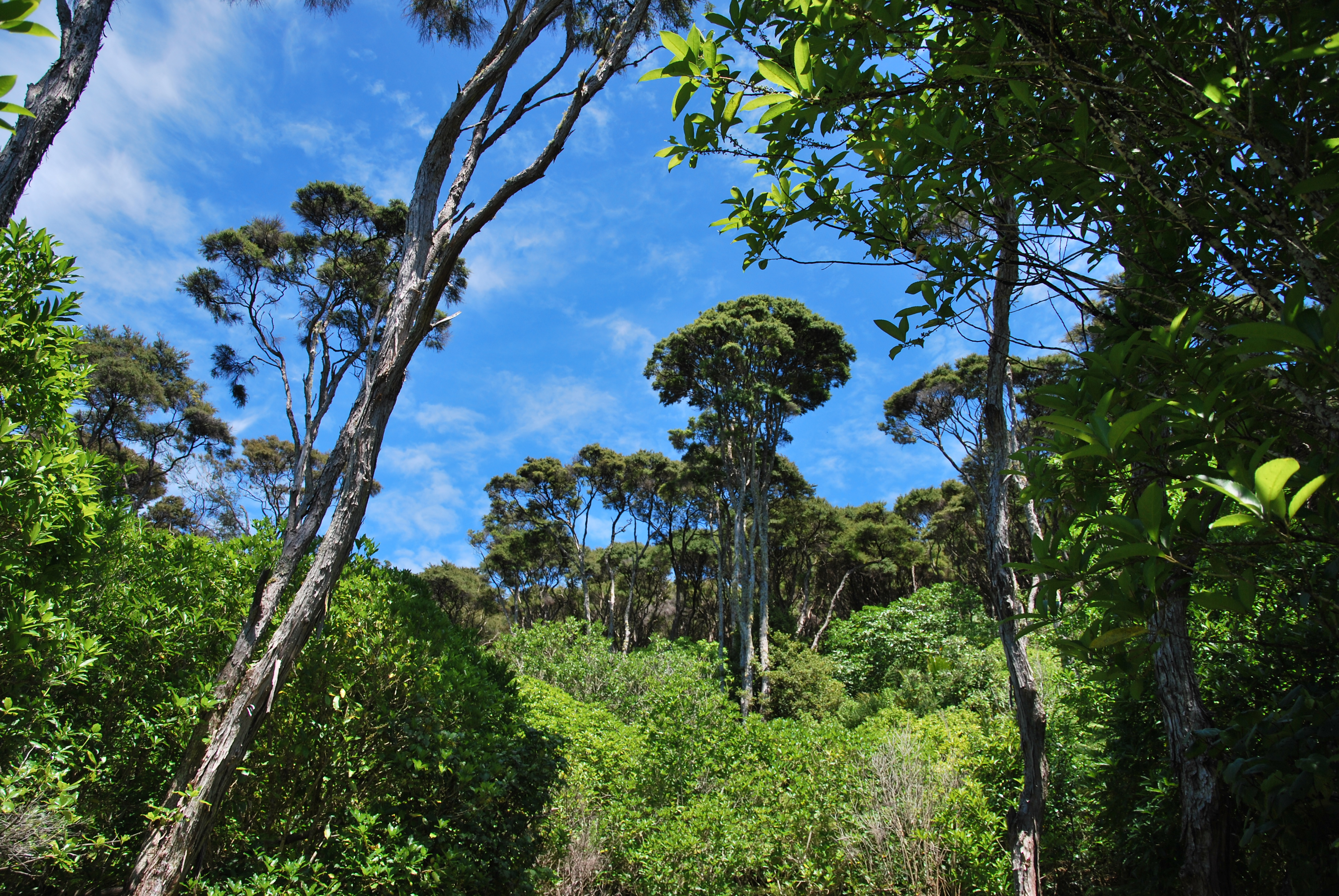 Waiheke Island - Auckland