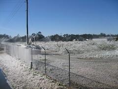 Frozen orchard