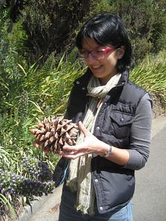 giant pinecone
