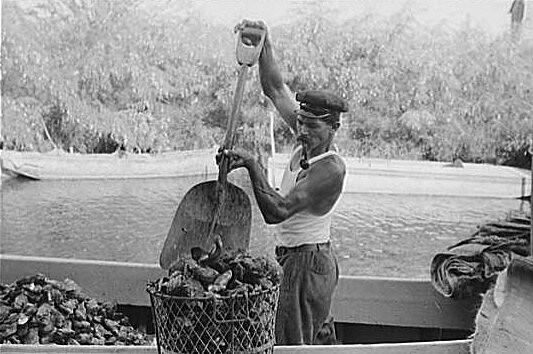 Header of oysterman