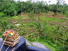 Sajen Indonesia Stad Com