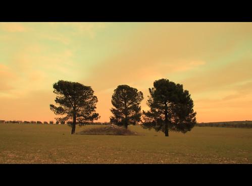 landscape bjork paysage puglia daydreaming apulia altamurgia corato goldenheartaward olétusfotos björkjóga topolébellezas