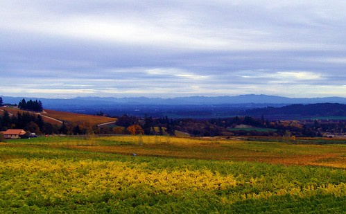 blue sky green yellow clouds oregon landscape weekend roadtrip hills winetasting pete picnik winecountry 2007 vibrance willamettevalley pete4ducks peteliedtke bethelheightsvineyards