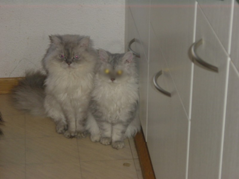 Cooli und Lucy2