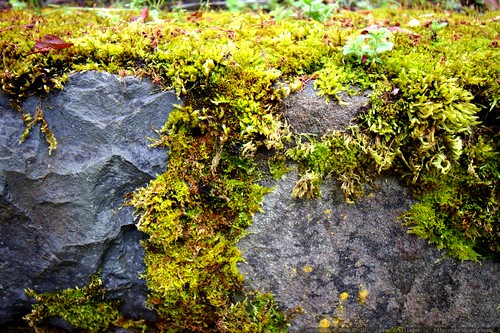 mossy stone wall near our house    MG 3365