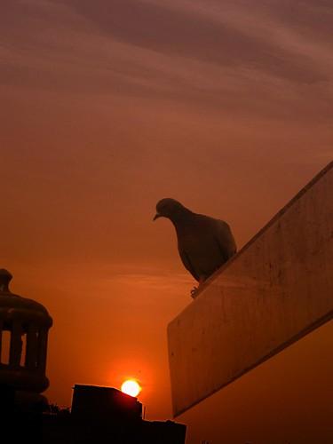 sunset orange bird bagh karol pankaj pankajanand anandparbat newdelhi5 pankajanand18