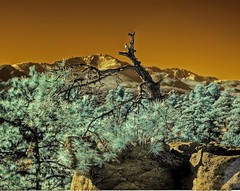 Infrared HDR Palmer Park Colorado Springs