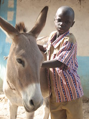 mare(0.0), horse(0.0), animal(1.0), donkey(1.0), mule(1.0), pack animal(1.0),