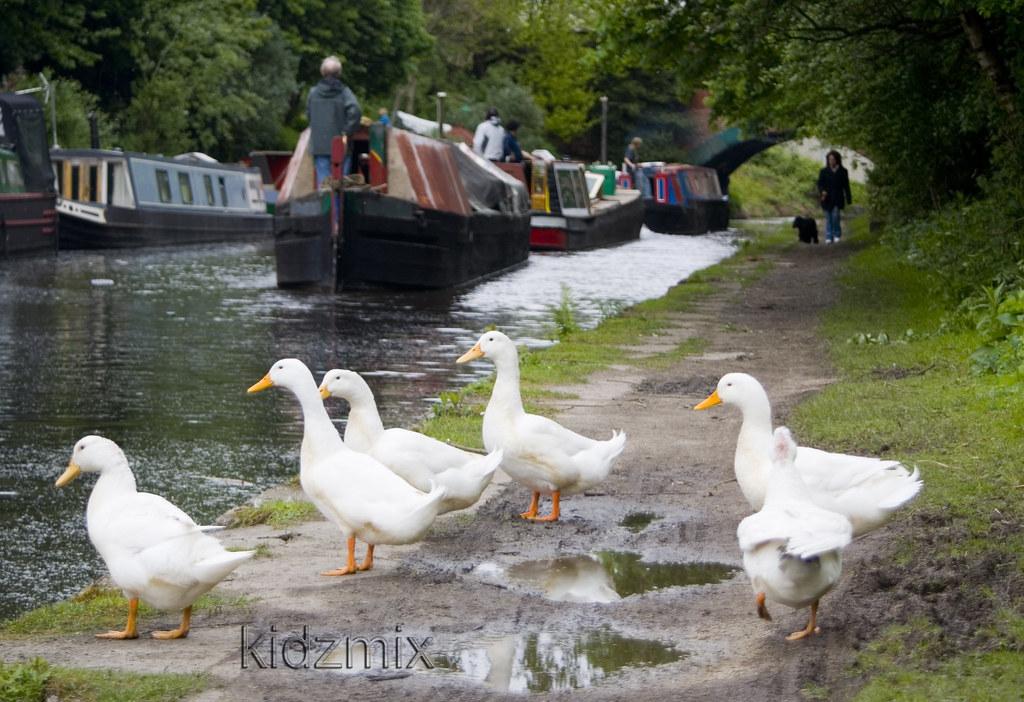 Audenshaw canal4