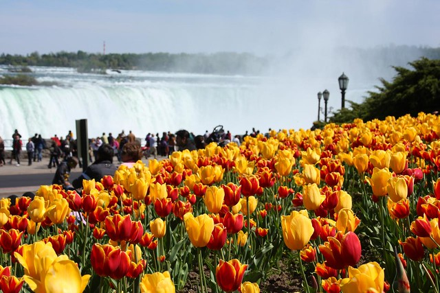 American Spring Break in Niagara Falls Ontario