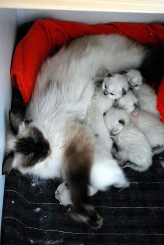 kitten feeding