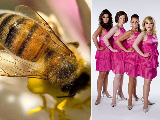 Left: The Honeybee Conservancy; right: the Sweet Divines (Photo by Jacob Blickenstaff)