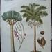 bertuch palms