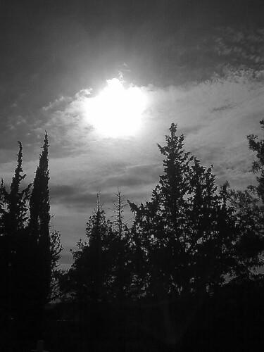 trees tree sunrise greece macedonia kilkis makedonia blackwhitephotos axioupolis