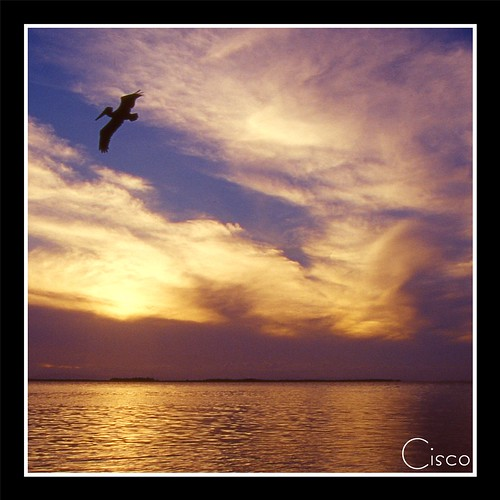 "sunset bird fly tramonto belize cisco tobacco volando photographia artofimages ""photographia"" bestcaptureaoi flyingaroundasunset"