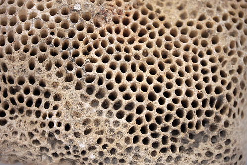 Wholly, Holey, Holy Fossil Coral