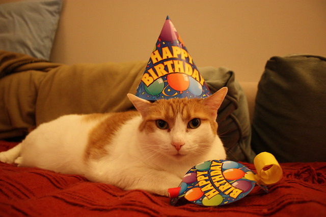 Cat in a Birthday Hat