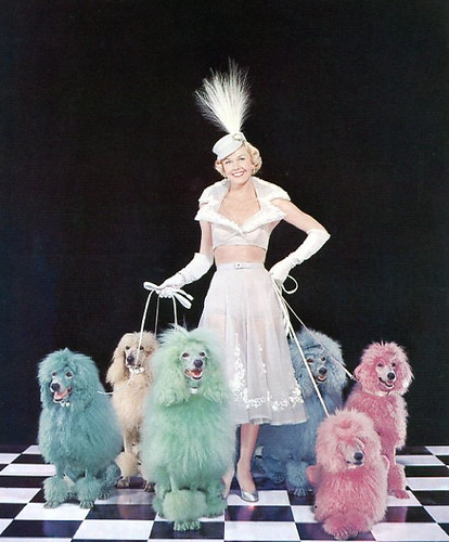 Doris Day and the poodles