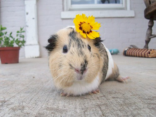 """Like my flower?""-Lemons"