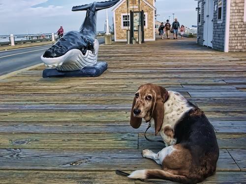 Whale/Dog, Provincetown, MA