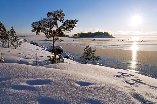 winter sea sun snow cold tree ice sunshine pinetree pine suomi finland geotagged island frozen sunny lumi talvi puu seashore meri archipelago sunshiny jää aurinko kotka saari saaristo mänty jäätynyt mussalo nikond200 kylmä aurinkoinen merenranta terrascania santalahti santalahdenluontopolku