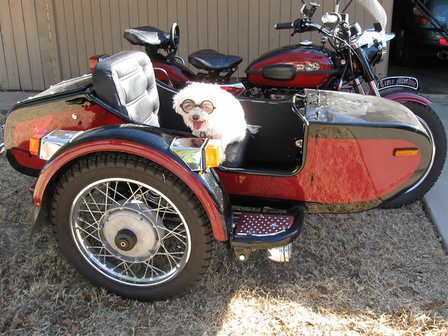 Murphy Ural motorcycle sidecar hack hacks dog fun exciting glasses