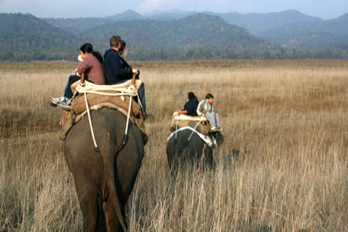 Elephant Safari-Corbett-5