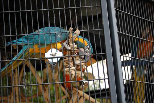 macaw toys (8)