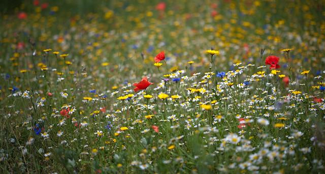 Co se skrývá v trávě obnovených bělokarpatských luk