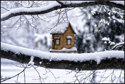 winter snow tree nature season nikon pennsylvania d200 természet fa montgomerycounty hó fehér tél nikond200 anawesomeshot impressedbeauty házikó goldstaraward faág hóesés madárház
