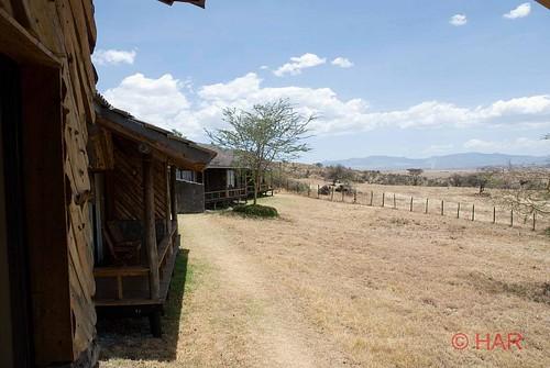 africa nature animal landscape nikon wildlife reserve safari nakuru lakenakuru d80 lakenakurulodge