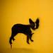 Boston Terrier by raelala