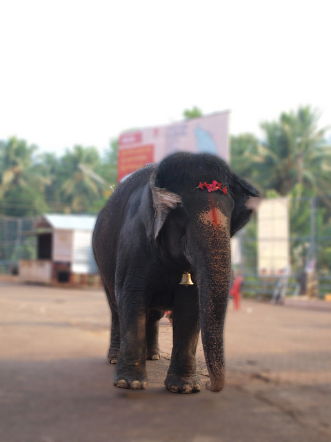 Elephant at Mookambika temple