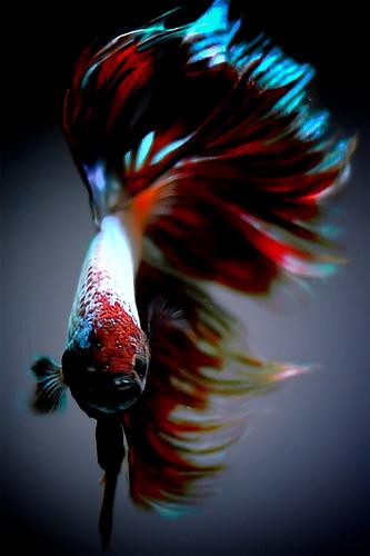 Antibiotics for your aquarium fish fish care for Erythromycin for fish