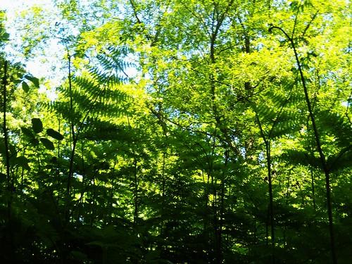 Ferns'n'trees