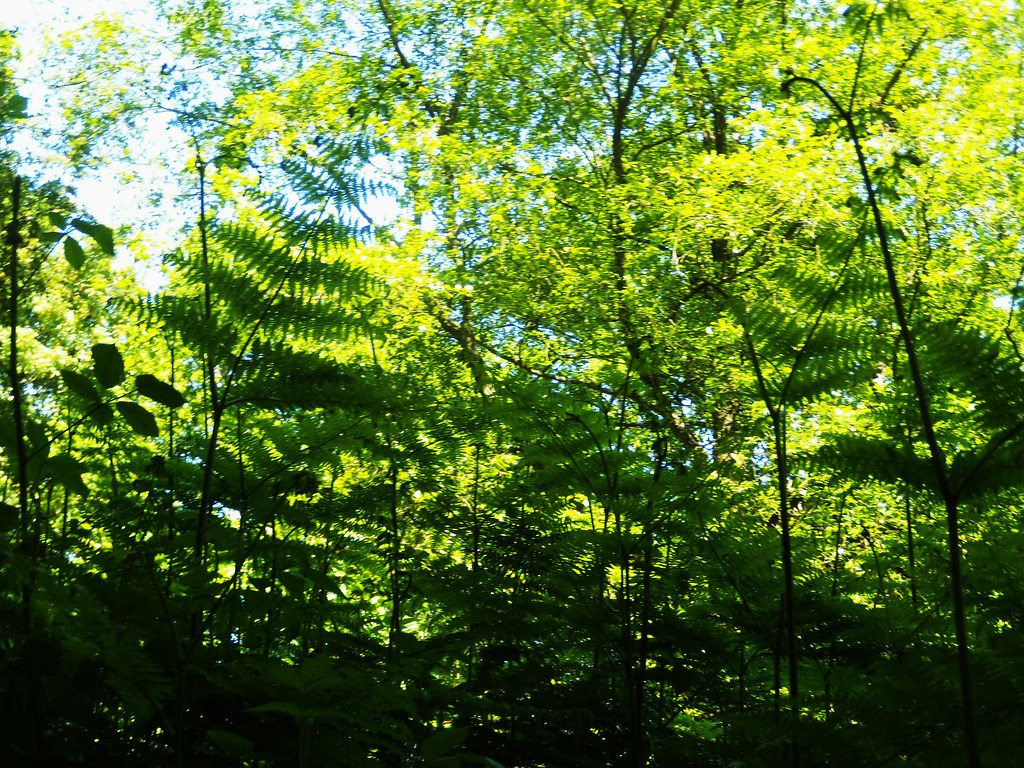 Ferns'n'trees Haslemere round
