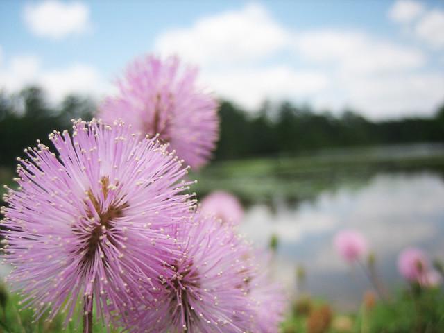 bloom [2]