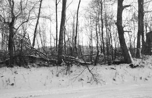 trees bw snow fencerow tbg