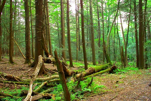 Wood Mountain Elevation : Elevation of barrett township pa usa maplogs