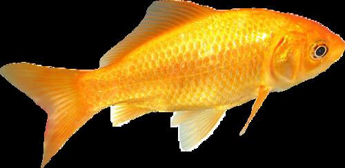 Fish Snip