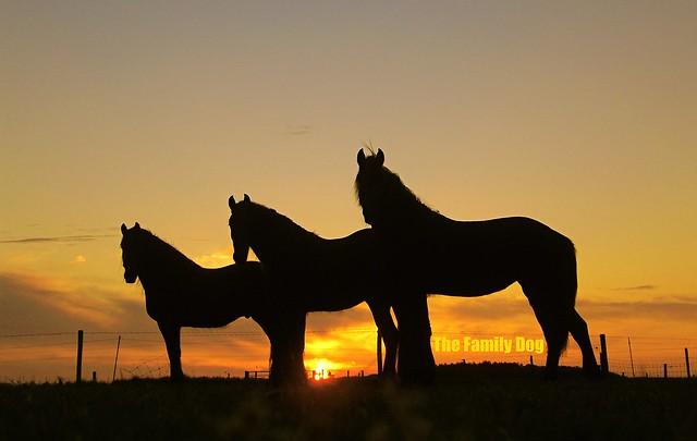 Horses , three of a kind