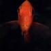 squirrelfish by doug.deep