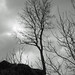 Lonely tree against the winter sky (BW)