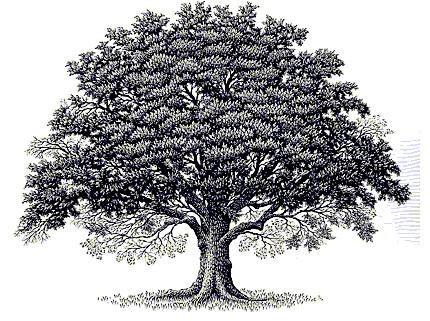Oaktree clip art | Flickr - Photo Sharing!  Oak Tree Clip Art
