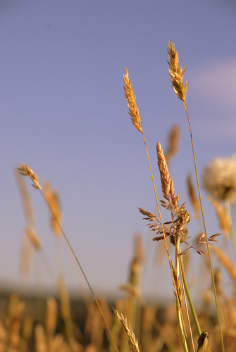 Summer grass (3)