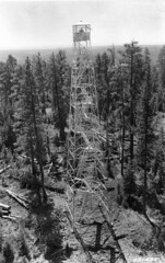 CCC enrollee Thales Bay of Orin, Illinois, at work on a fire tower, Camp Ingram, F-49, Fremont National Forest, Oregon