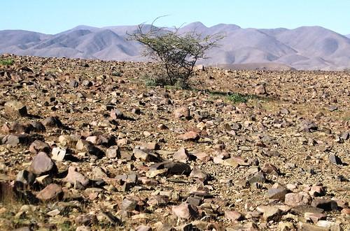 El desierto pedregoso hamada geobiombo for Suelo pedregoso