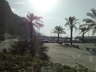 Praia da Calheta képe. sun beach marina hotel palmtrees madeira calheta twitpic